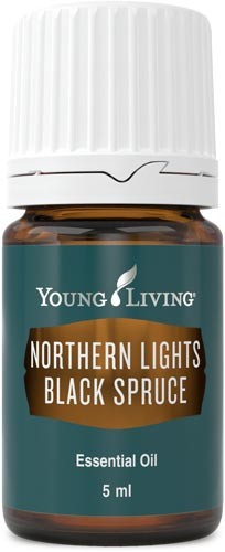 Northern Lights Black Spruce - Schwarzfichte