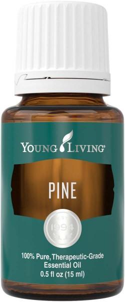 KIEFER – PINE Pinus sylvestris